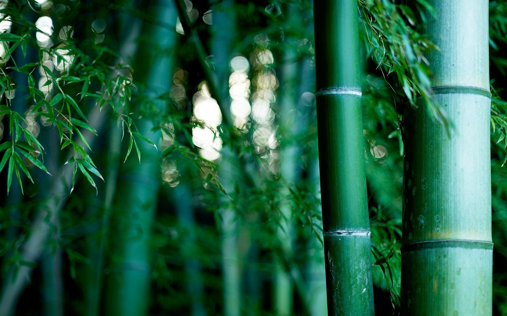 of earth ro bamboo For instance, ten bamboo stalks denotes all things good in life gifting ten bamboo stalks shows that you want the person to have a perfect happy life the lucky bamboo plays a significant role in fen.