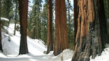 Лес, California, США, S&K, Sequoia & Kings Canyon National Park
